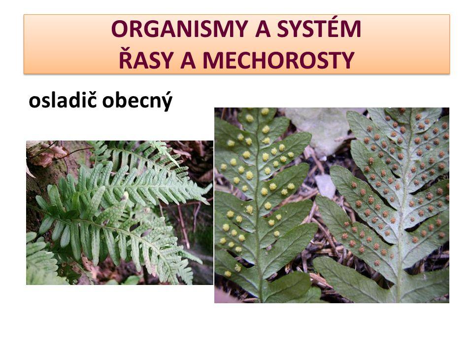 ORGANISMY A SYSTÉM ŘASY A MECHOROSTY osladič obecný