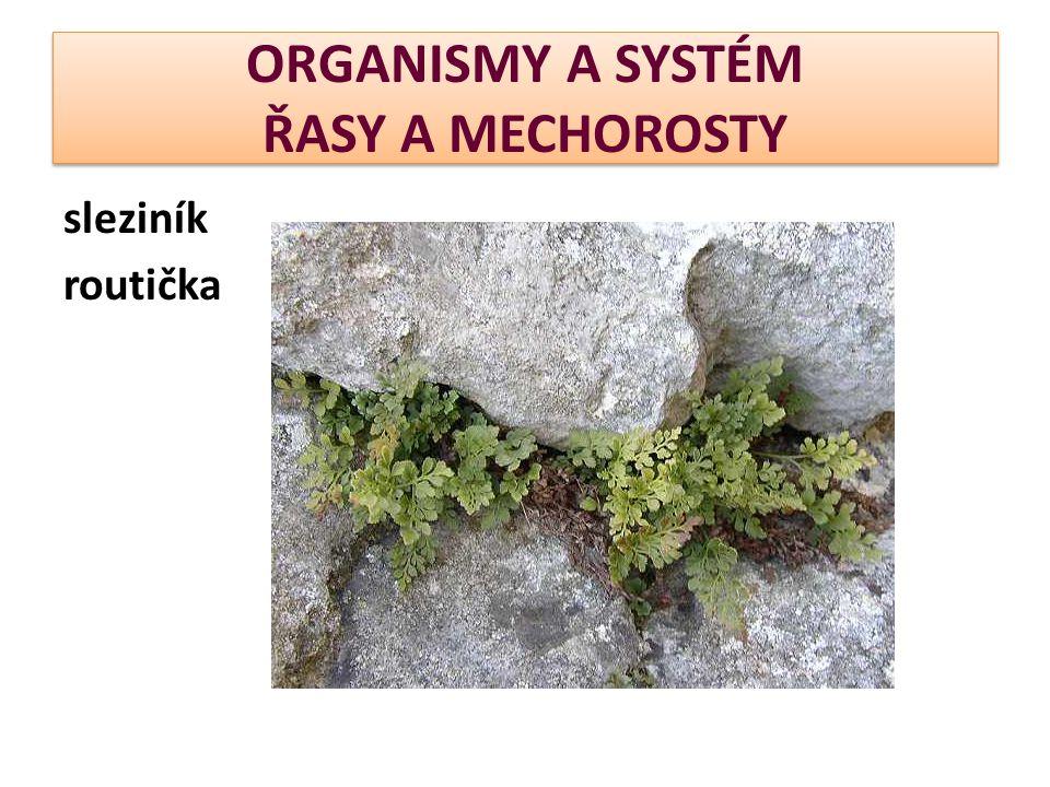 ORGANISMY A SYSTÉM ŘASY A MECHOROSTY sleziník routička