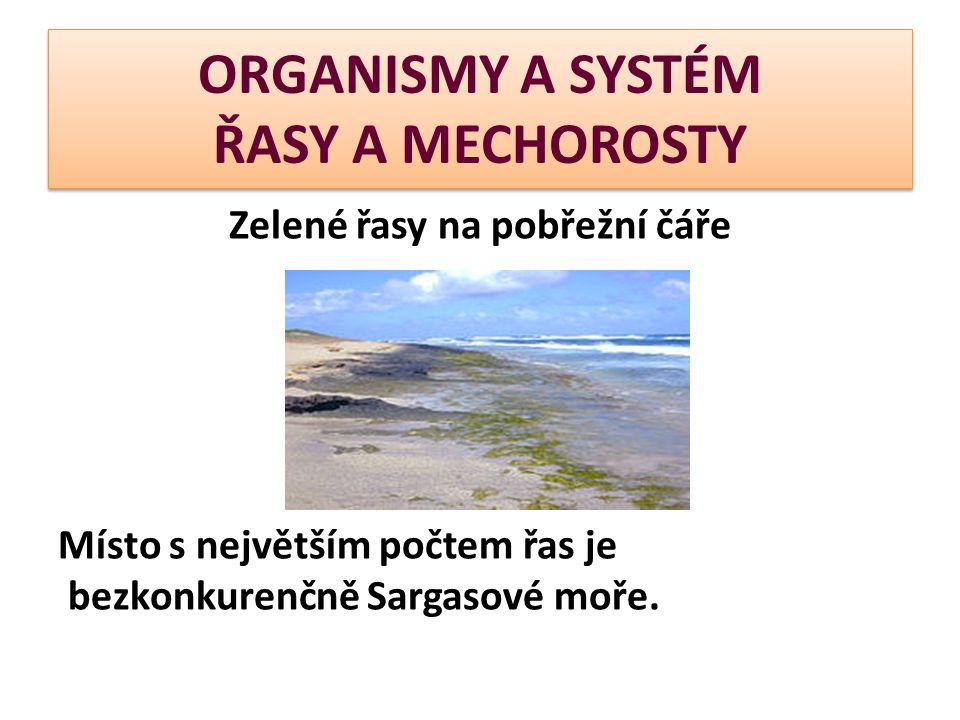 ORGANISMY A SYSTÉM ŘASY A MECHOROSTY Zelené řasy na pobřežní čáře Místo s největším počtem řas je bezkonkurenčně Sargasové moře.