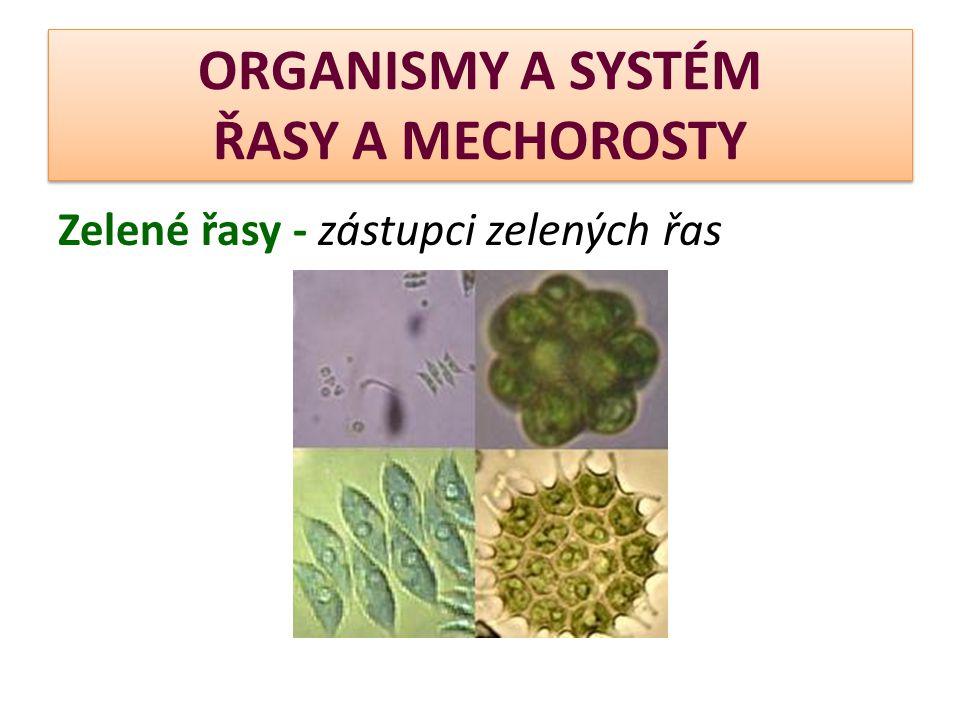ORGANISMY A SYSTÉM ŘASY A MECHOROSTY  Oddělení  Hlevíky Hlevíky  Játrovky Játrovky  Mechy Mechy