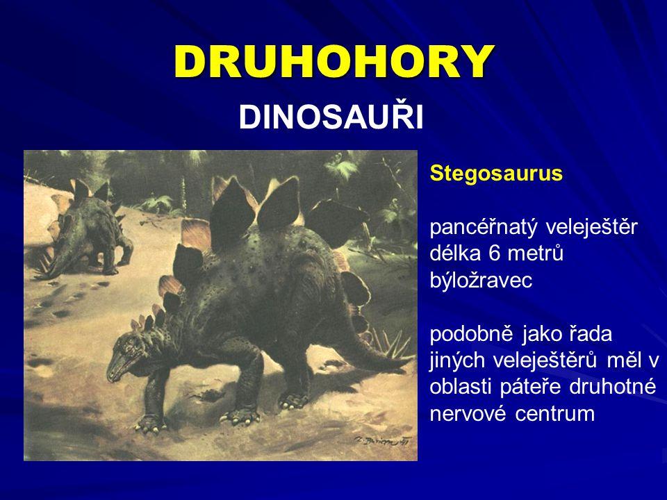 DRUHOHORY DINOSAUŘI Stegosaurus pancéřnatý veleještěr délka 6 metrů býložravec podobně jako řada jiných veleještěrů měl v oblasti páteře druhotné nervové centrum