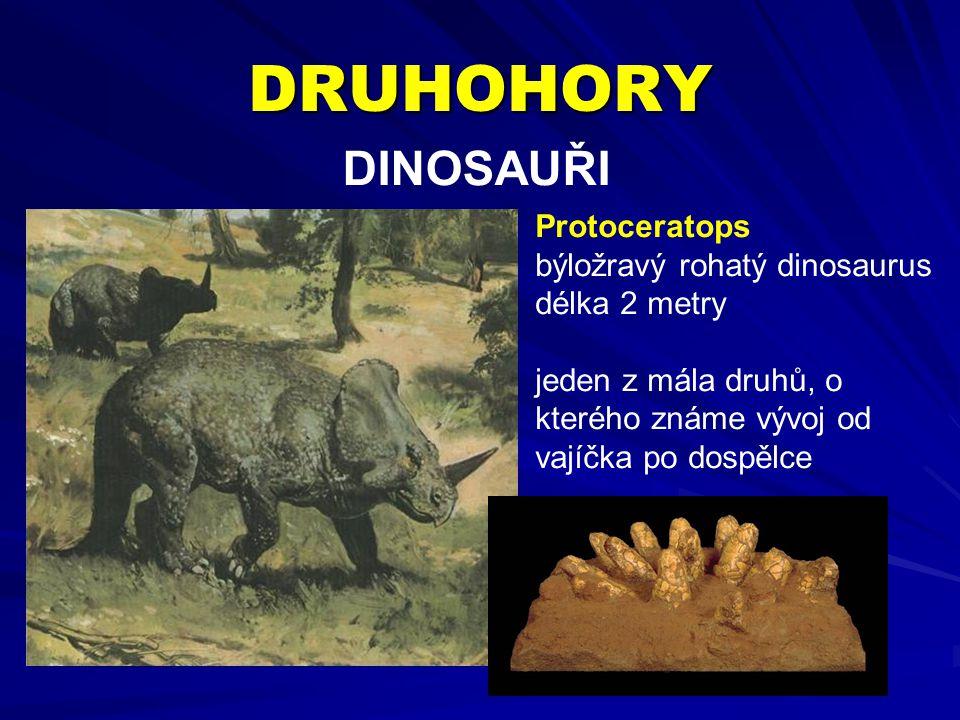 DRUHOHORY DINOSAUŘI Protoceratops býložravý rohatý dinosaurus délka 2 metry jeden z mála druhů, o kterého známe vývoj od vajíčka po dospělce