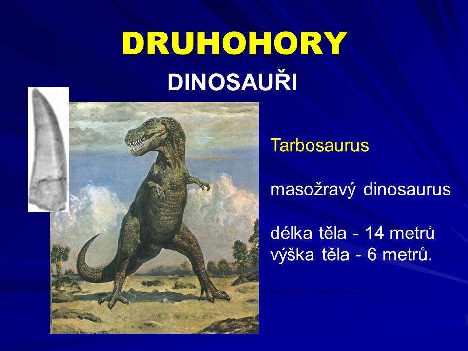 DRUHOHORY DINOSAUŘI Tarbosaurus masožravý dinosaurus délka těla - 14 metrů výška těla - 6 metrů.