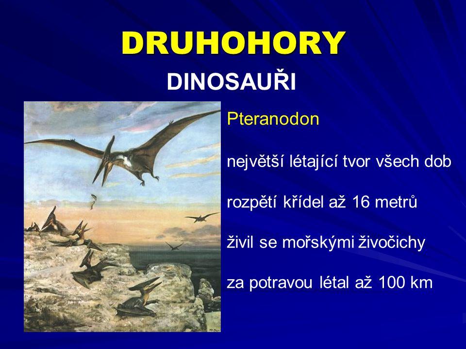 DRUHOHORY DINOSAUŘI Pteranodon největší létající tvor všech dob rozpětí křídel až 16 metrů živil se mořskými živočichy za potravou létal až 100 km