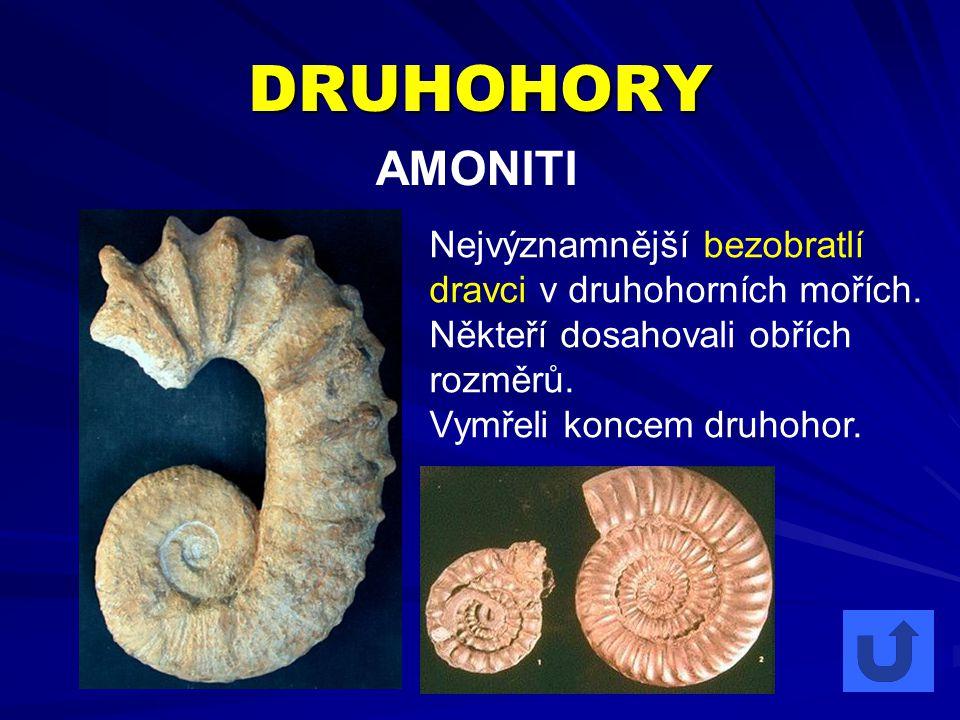 DRUHOHORY AMONITI Nejvýznamnější bezobratlí dravci v druhohorních mořích. Někteří dosahovali obřích rozměrů. Vymřeli koncem druhohor.