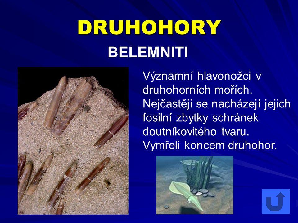 DRUHOHORY BELEMNITI Významní hlavonožci v druhohorních mořích. Nejčastěji se nacházejí jejich fosilní zbytky schránek doutníkovitého tvaru. Vymřeli ko