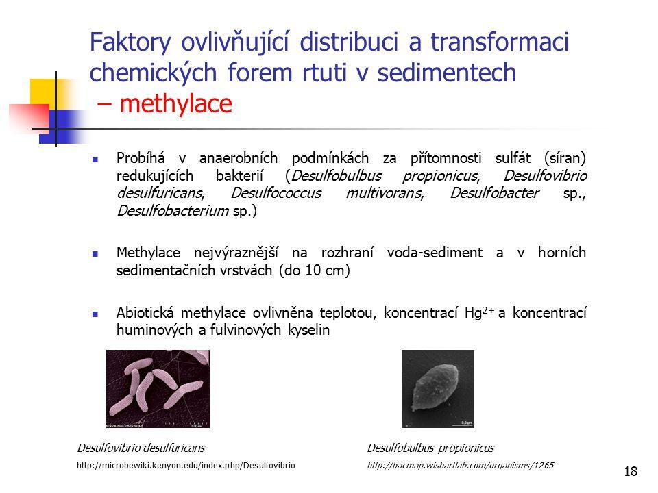 18 Faktory ovlivňující distribuci a transformaci chemických forem rtuti v sedimentech – methylace Probíhá v anaerobních podmínkách za přítomnosti sulf
