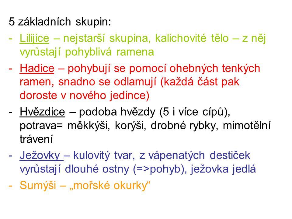 5 základních skupin: -Lilijice – nejstarší skupina, kalichovité tělo – z něj vyrůstají pohyblivá ramena -Hadice – pohybují se pomocí ohebných tenkých