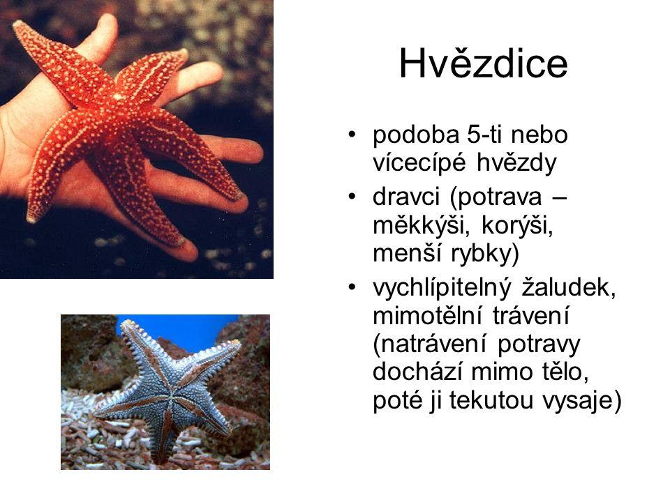 Hvězdice podoba 5-ti nebo vícecípé hvězdy dravci (potrava – měkkýši, korýši, menší rybky) vychlípitelný žaludek, mimotělní trávení (natrávení potravy