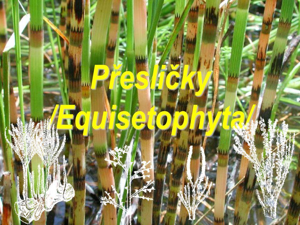 Přesličky /Equisetophyta/