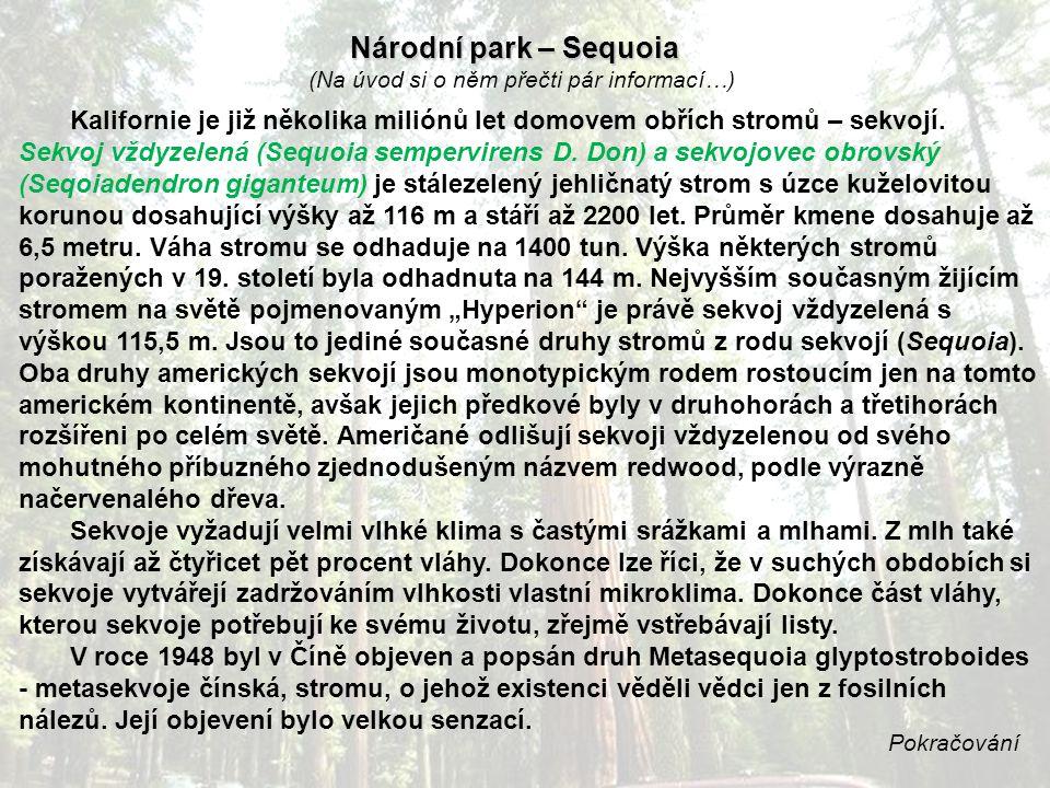 Národní park – Sequoia (Na úvod si o něm přečti pár informací…) Kalifornie je již několika miliónů let domovem obřích stromů – sekvojí.