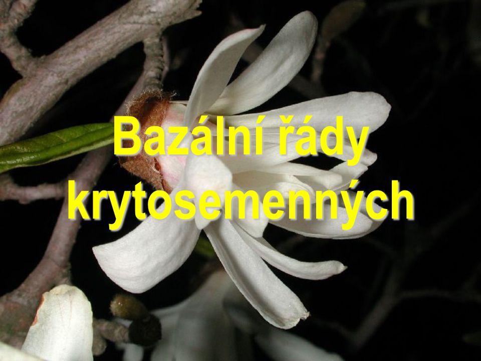 Nymphaeales Amborellales Laurales Piperales Magnoliales Aristolochiales Bazální řády 3 % 22% 75% Magnoliophyta Liliopsida (Monocots) Rosopsida (Eudico