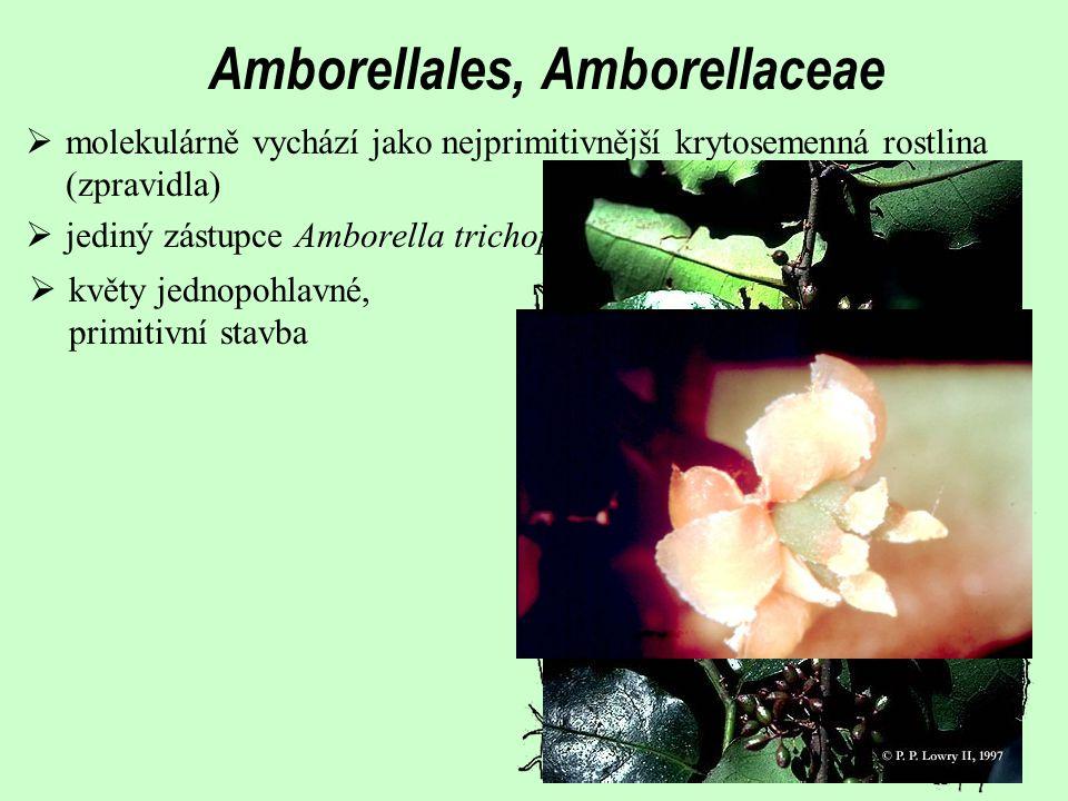  bioaktivní neolignany příp. benzylizochinolinové alkaloidy Obsahové látky  sekreční buňky s éterickými oleji (např. sesquiterpeny)  muškátový ořec