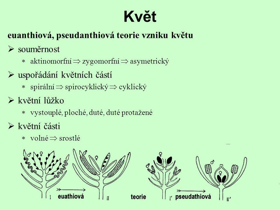 Květ euanthiová, pseudanthiová teorie vzniku květu  uspořádání květních částí  spirální  spirocyklický  cyklický  souměrnost  aktinomorfní  zygomorfní  asymetrický  květní lůžko  vystouplé, ploché, duté, duté protažené  květní části  volné  srostlé