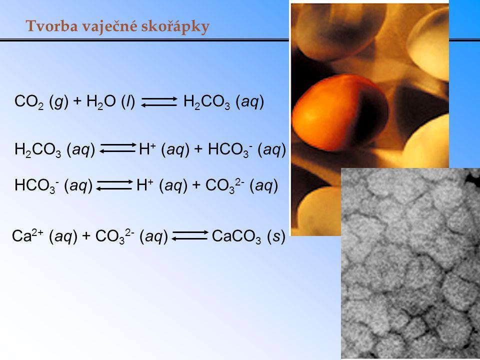 Tvorba vaječné skořápky Ca 2+ (aq) + CO 3 2- (aq) CaCO 3 (s) H 2 CO 3 (aq) H + (aq) + HCO 3 - (aq) HCO 3 - (aq) H + (aq) + CO 3 2- (aq) CO 2 (g) + H 2 O (l) H 2 CO 3 (aq)