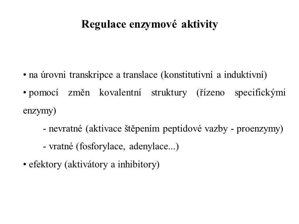 na úrovni transkripce a translace (konstitutivní a induktivní) pomocí změn kovalentní struktury (řízeno specifickými enzymy) - nevratné (aktivace štěpením peptidové vazby - proenzymy) - vratné (fosforylace, adenylace...) efektory (aktivátory a inhibitory) Regulace enzymové aktivity