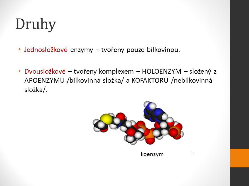 Druhy Jednosložkové enzymy – tvořeny pouze bílkovinou. Dvousložkové – tvořeny komplexem – HOLOENZYM – složený z APOENZYMU /bílkovinná složka/ a KOFAKT