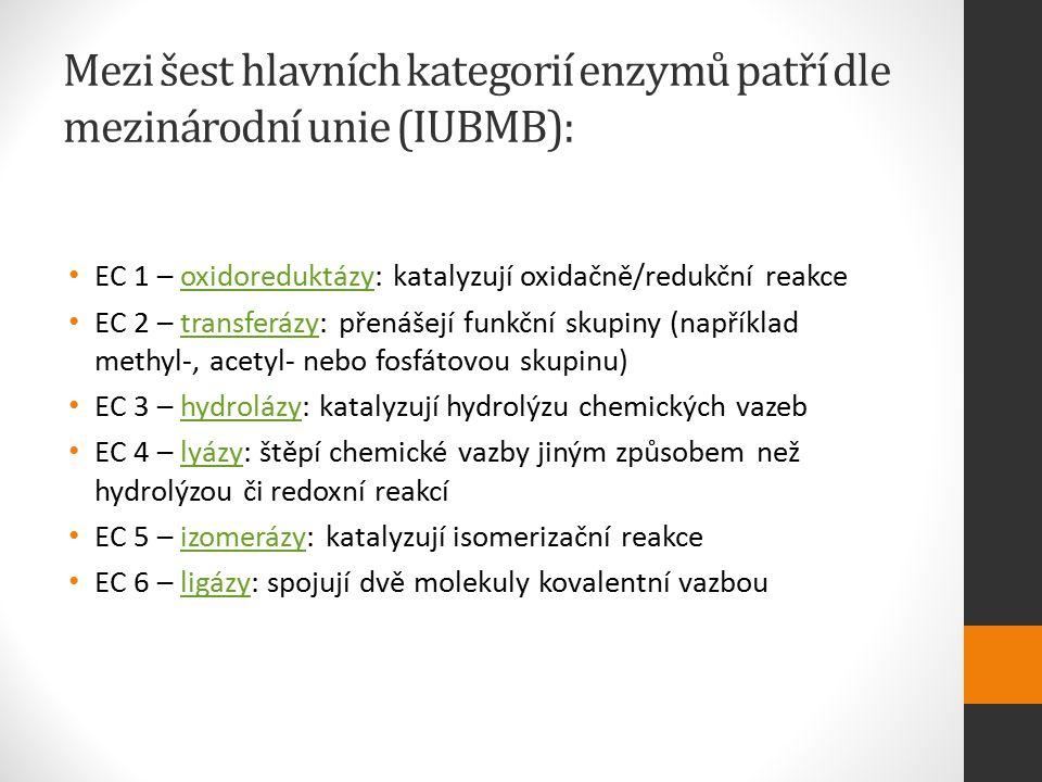 Mezi šest hlavních kategorií enzymů patří dle mezinárodní unie (IUBMB): EC 1 – oxidoreduktázy: katalyzují oxidačně/redukční reakceoxidoreduktázy EC 2