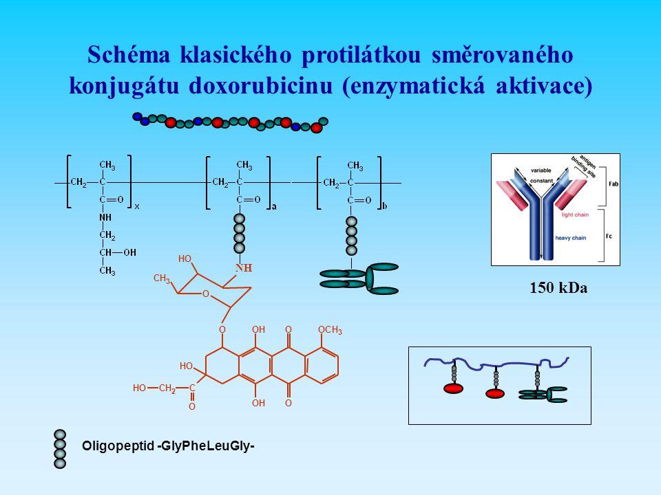 Schéma klasického protilátkou směrovaného konjugátu doxorubicinu (enzymatická aktivace) O HO CH 3 OH OH OCH 3 O O HO CCH 2 HO O O NH Oligopeptid -GlyP
