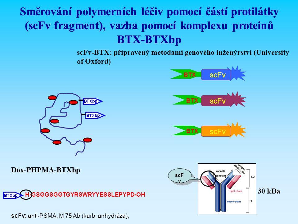 Směrování polymerních léčiv pomocí částí protilátky (scFv fragment), vazba pomocí komplexu proteinů BTX-BTXbp Dox-PHPMA-BTXbp scFv-BTX: připravený met