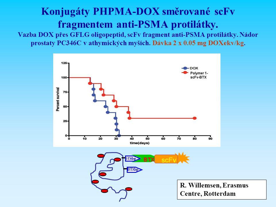 Konjugáty PHPMA-DOX směrované scFv fragmentem anti-PSMA protilátky. Vazba DOX přes GFLG oligopeptid, scFv fragment anti-PSMA protilátky. Nádor prostat