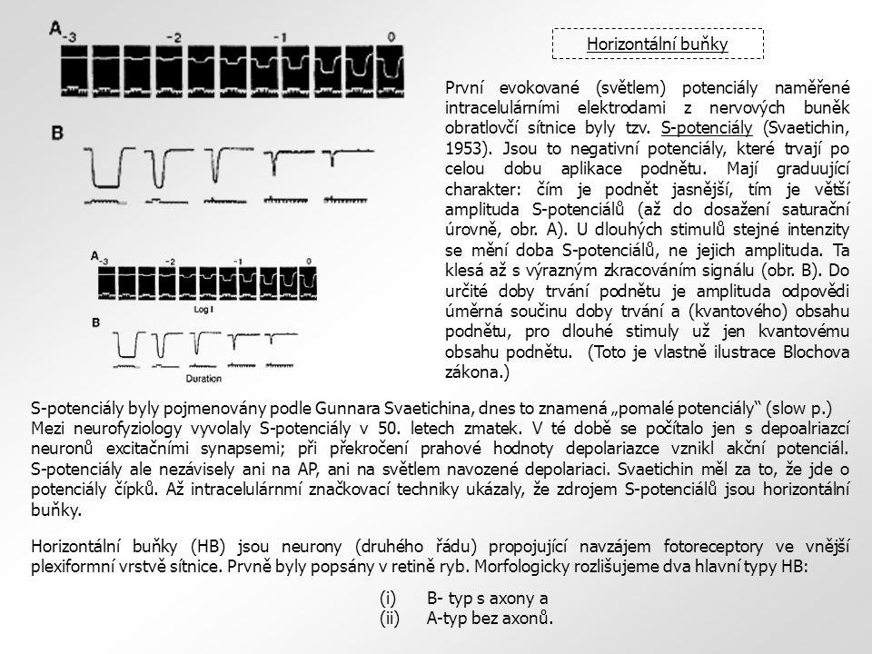 První evokované (světlem) potenciály naměřené intracelulárními elektrodami z nervových buněk obratlovčí sítnice byly tzv. S-potenciály (Svaetichin, 19