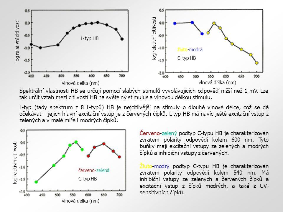 Červeno-zelený podtyp C-typu HB je charakterizován zvratem polarity odpovědi kolem 600 nm. Tyto buňky mají excitační vstupy ze zelených a modrých čípk