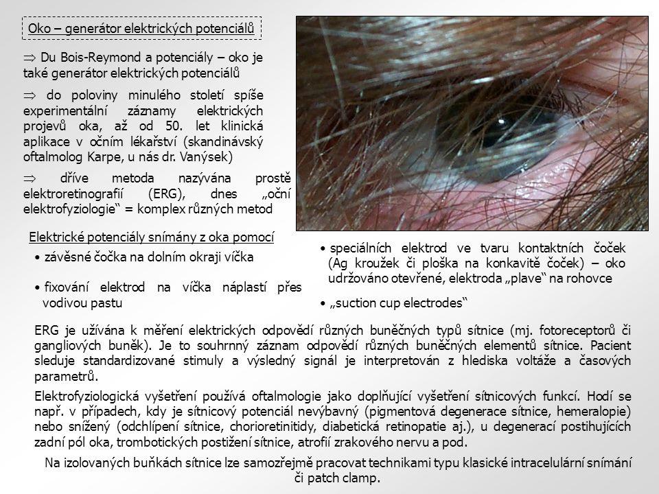 bělimacévnatka sítnice rohovka zornice čočka duhovka ciliární tělísko optický nerv Oko – generátor elektrických potenciálů  Du Bois-Reymond a potenci