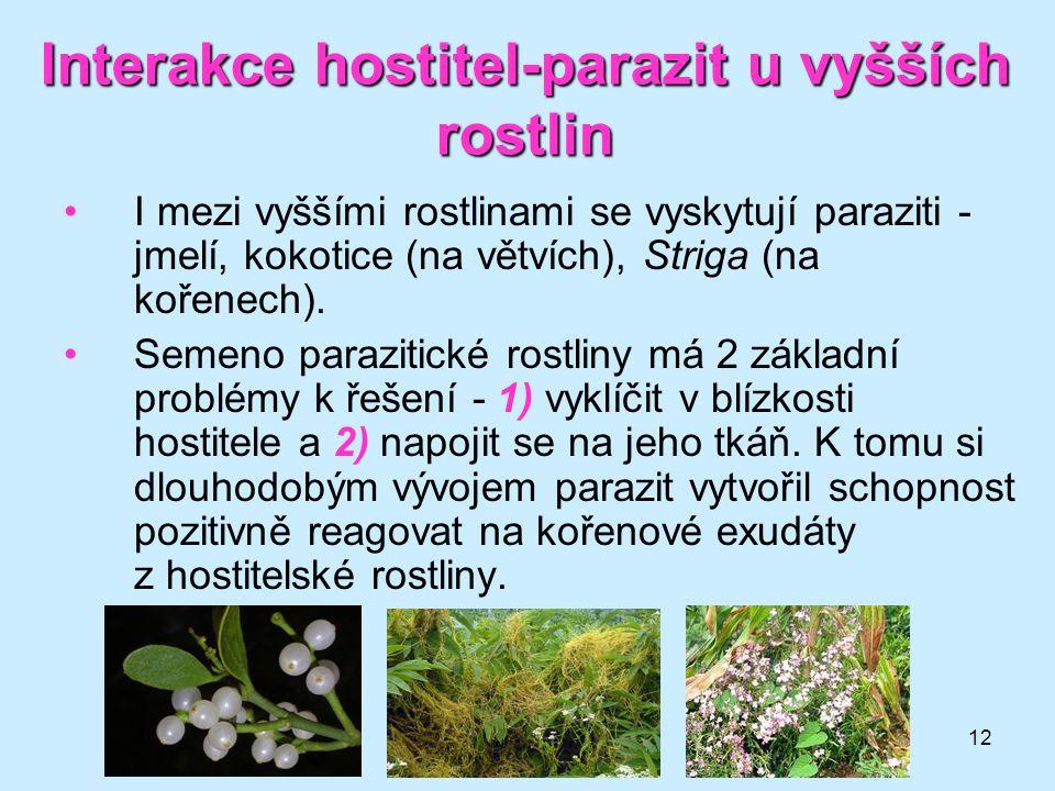 12 Interakce hostitel-parazit u vyšších rostlin I mezi vyššími rostlinami se vyskytují paraziti - jmelí, kokotice (na větvích), Striga (na kořenech).
