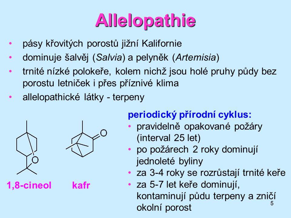 5 Allelopathie pásy křovitých porostů jižní Kalifornie dominuje šalvěj (Salvia) a pelyněk (Artemisia) trnité nízké polokeře, kolem nichž jsou holé pru