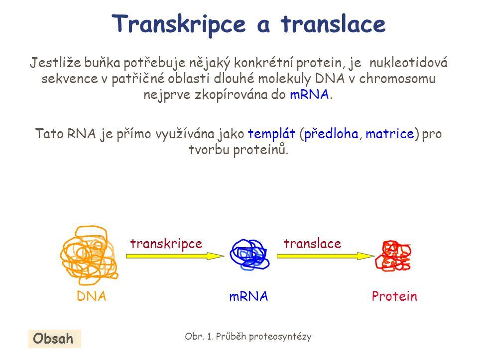Transkripce a translace Jestliže buňka potřebuje nějaký konkrétní protein, je nukleotidová sekvence v patřičné oblasti dlouhé molekuly DNA v chromosom