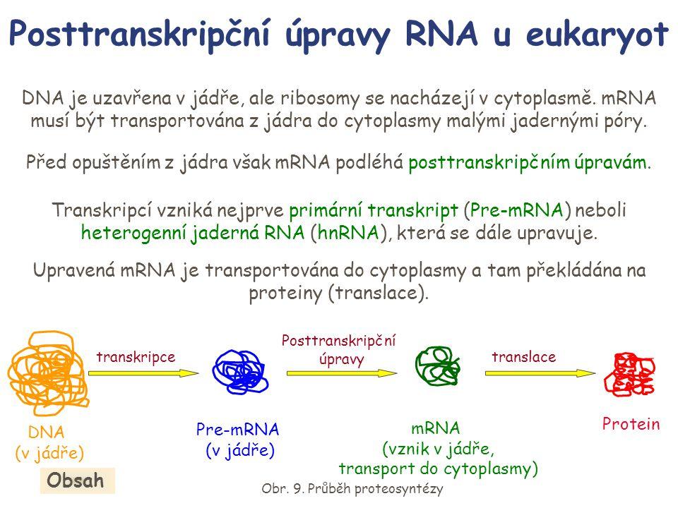 Posttranskripční úpravy RNA u eukaryot DNA je uzavřena v jádře, ale ribosomy se nacházejí v cytoplasmě. mRNA musí být transportována z jádra do cytopl