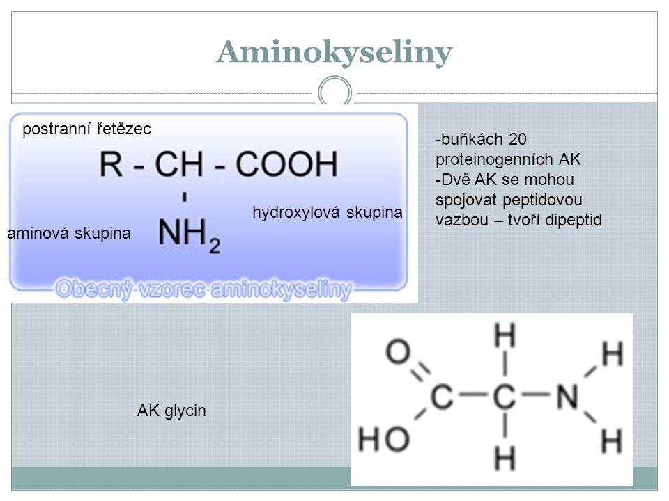 Aminokyseliny AK glycin aminová skupina hydroxylová skupina postranní řetězec -buňkách 20 proteinogenních AK -Dvě AK se mohou spojovat peptidovou vazbou – tvoří dipeptid