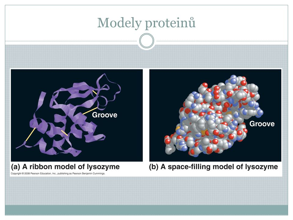 Modely proteinů