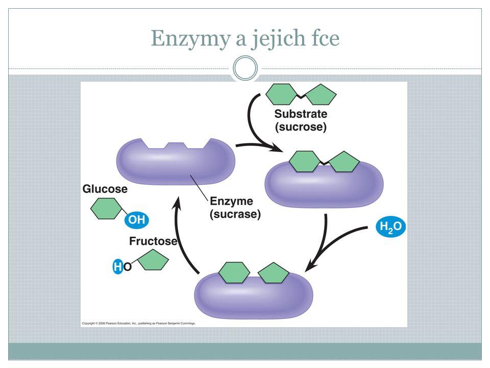 Enzymy a jejich fce