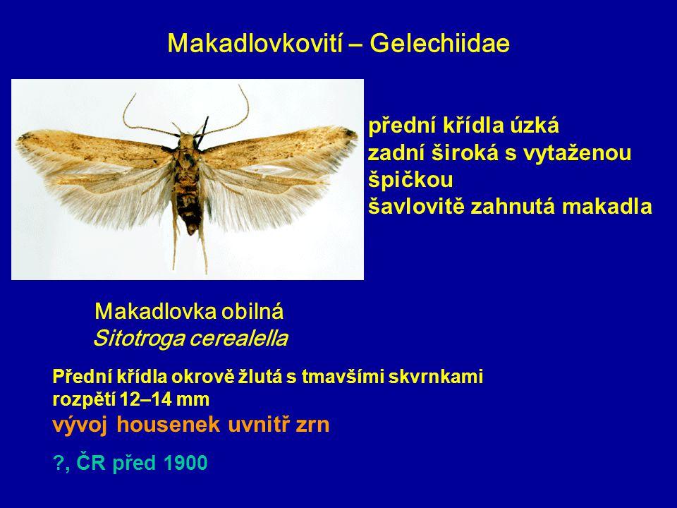 Makadlovkovití – Gelechiidae Makadlovka obilná Sitotroga cerealella Přední křídla okrově žlutá s tmavšími skvrnkami rozpětí 12–14 mm vývoj housenek uv