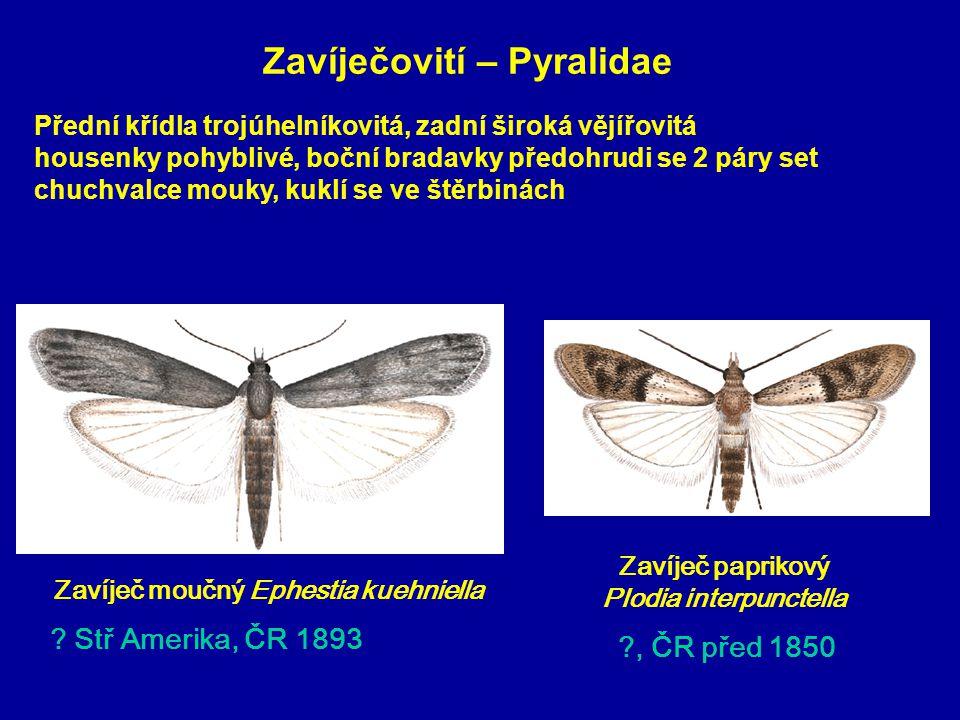 Zavíječovití – Pyralidae Zavíječ paprikový Plodia interpunctella Zavíječ moučný Ephestia kuehniella .