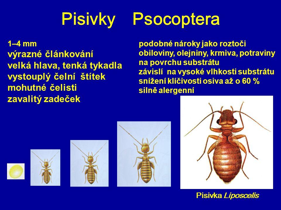 Pisivky Psocoptera Pisivka Liposcelis podobné nároky jako roztoči obiloviny, olejniny, krmiva, potraviny na povrchu substrátu závislí na vysoké vlhkos