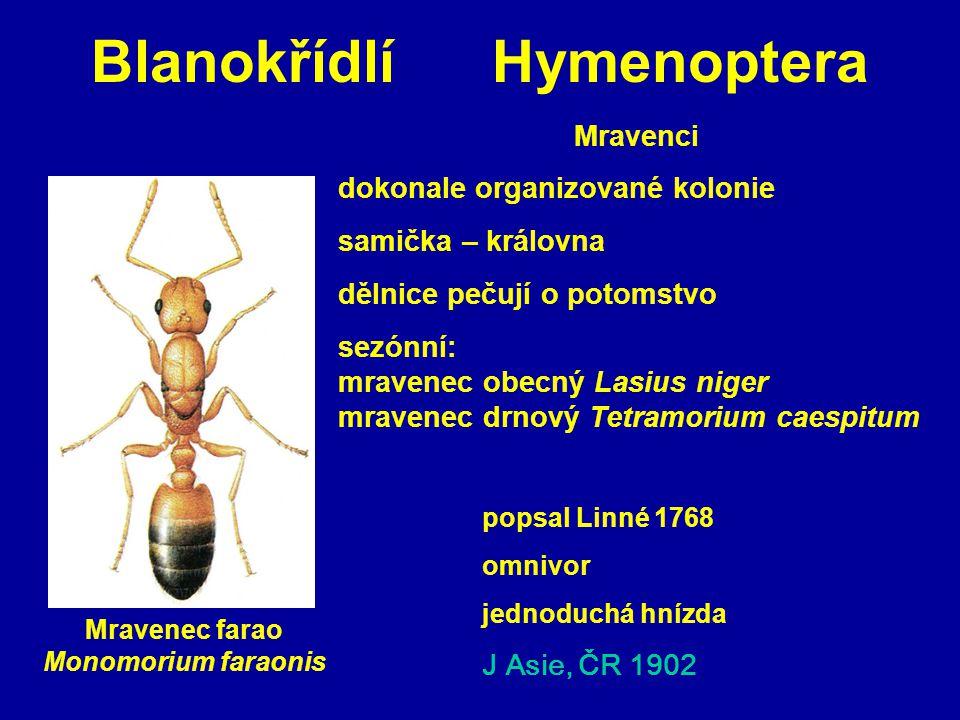 Blanokřídlí Hymenoptera popsal Linné 1768 omnivor jednoduchá hnízda J Asie, ČR 1902 Mravenci dokonale organizované kolonie samička – královna dělnice