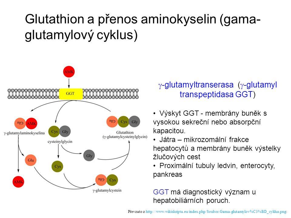 Glutathion a přenos aminokyselin (gama- glutamylový cyklus) Převzato z http://www.wikiskripta.eu/index.php/Soubor:Gama-glutamylov%C3%BD_cyklus.png: 