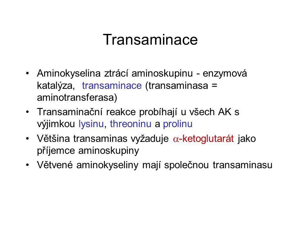 Transaminace Aminokyselina ztrácí aminoskupinu - enzymová katalýza, transaminace (transaminasa = aminotransferasa) Transaminační reakce probíhají u vš