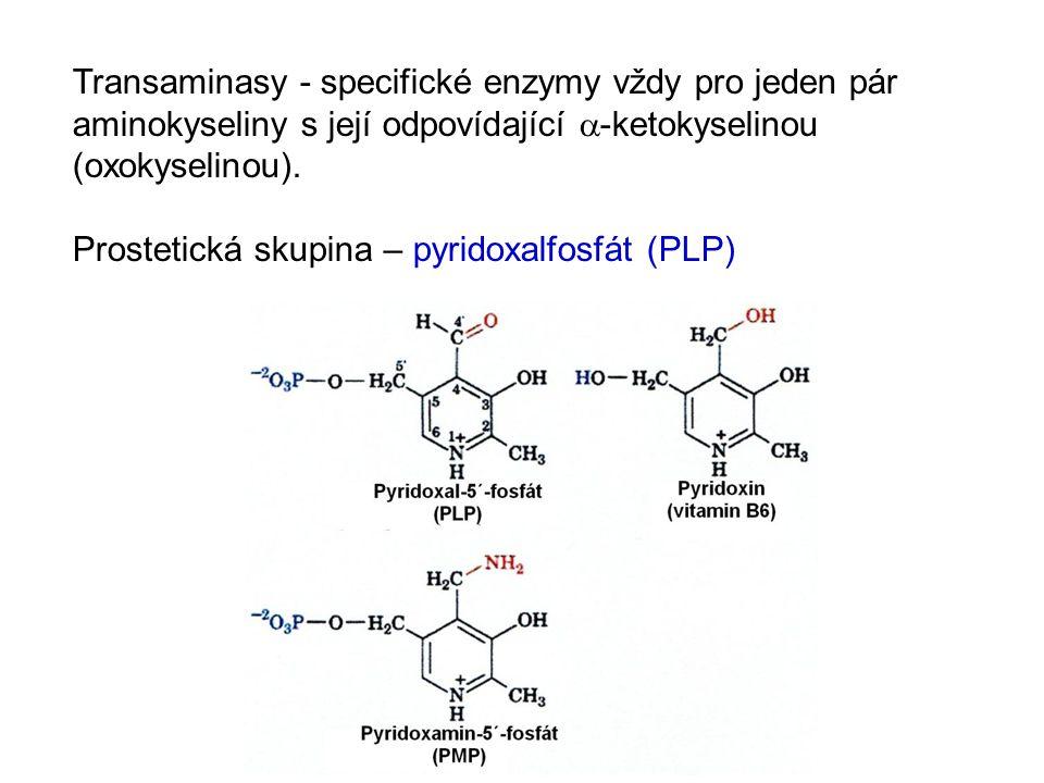 Transaminasy - specifické enzymy vždy pro jeden pár aminokyseliny s její odpovídající  -ketokyselinou (oxokyselinou). Prostetická skupina – pyridoxal