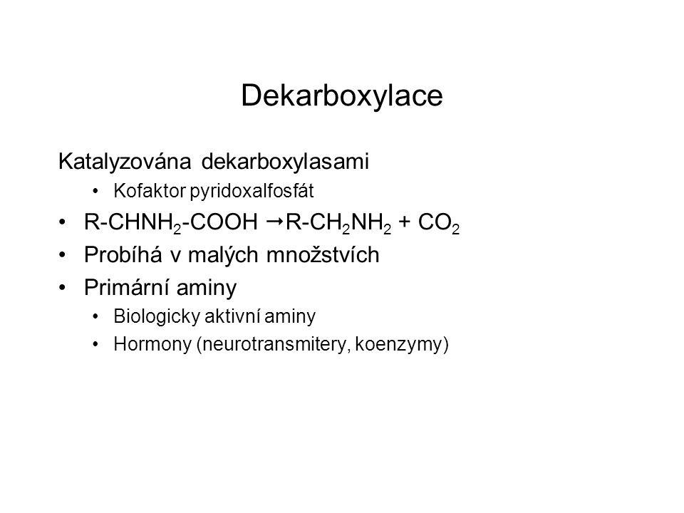 Dekarboxylace Katalyzována dekarboxylasami Kofaktor pyridoxalfosfát R-CHNH 2 -COOH  R-CH 2 NH 2 + CO 2 Probíhá v malých množstvích Primární aminy Bio