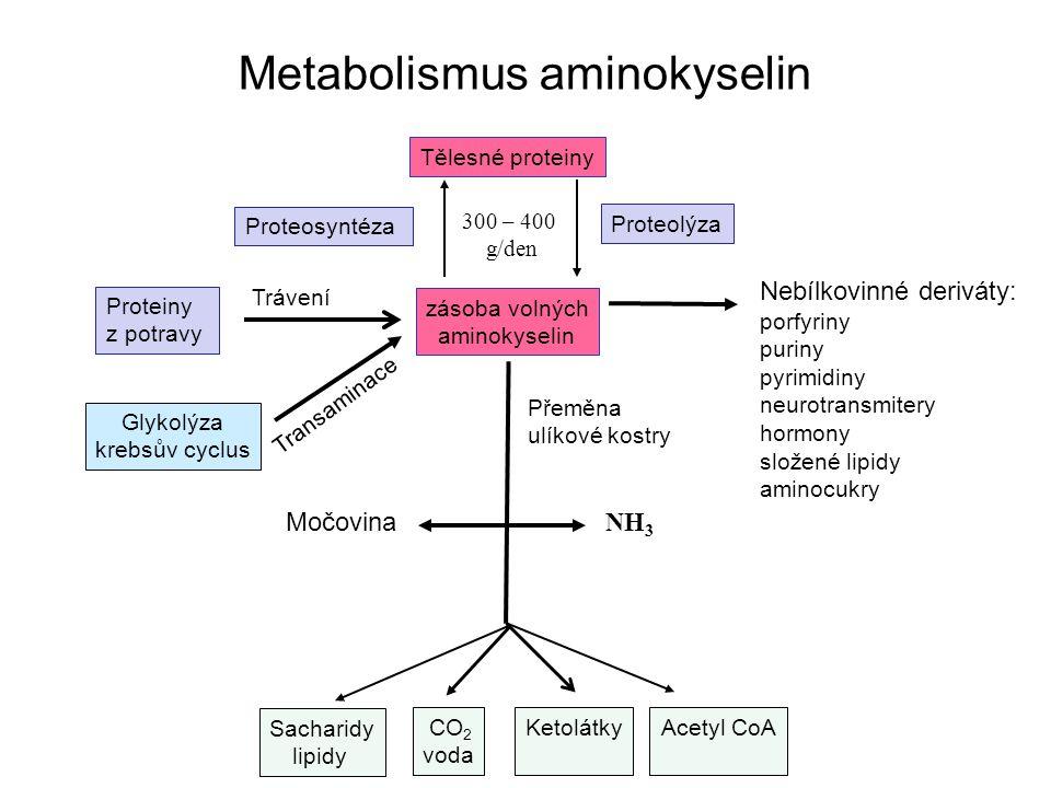Metabolismus aminokyselin Proteiny z potravy Nebílkovinné deriváty: porfyriny puriny pyrimidiny neurotransmitery hormony složené lipidy aminocukry Těl