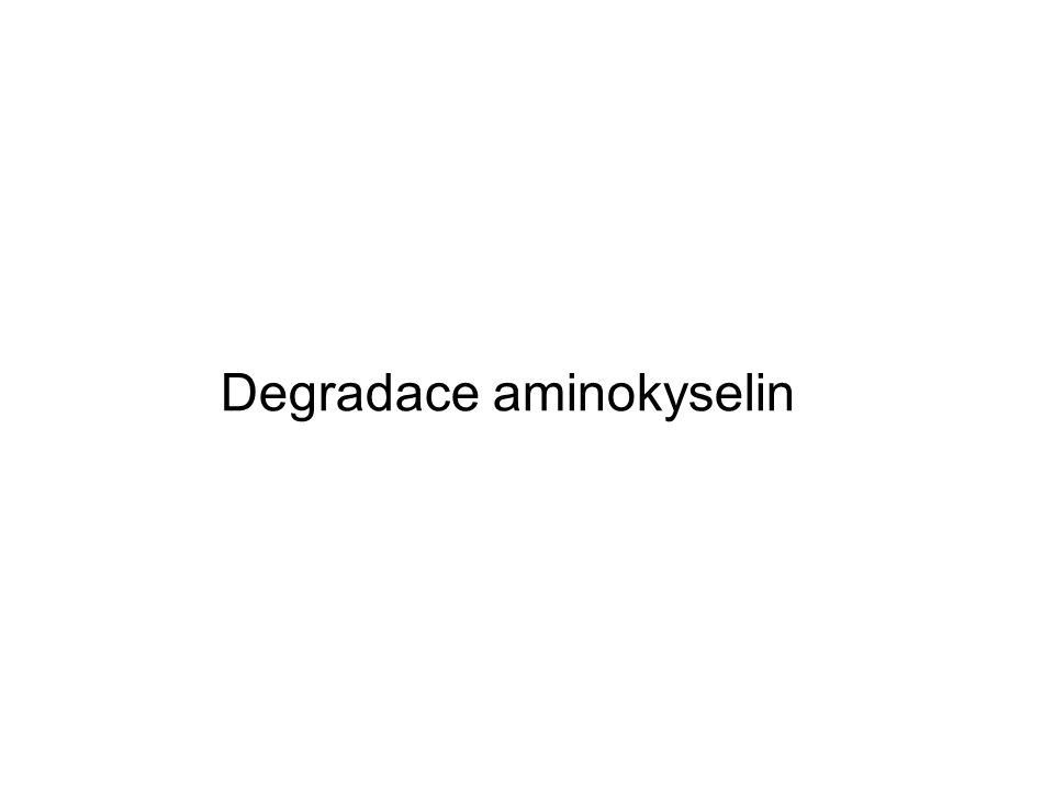 Degradace aminokyselin