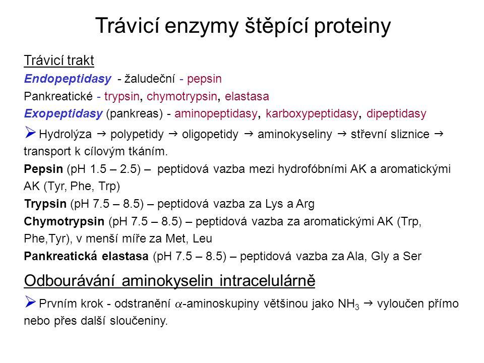 Trávicí enzymy štěpící proteiny Trávicí trakt Endopeptidasy - žaludeční - pepsin Pankreatické - trypsin, chymotrypsin, elastasa Exopeptidasy (pankreas