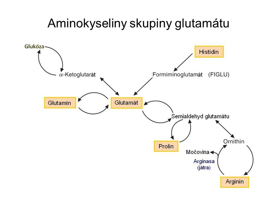 Aminokyseliny skupiny glutamátu