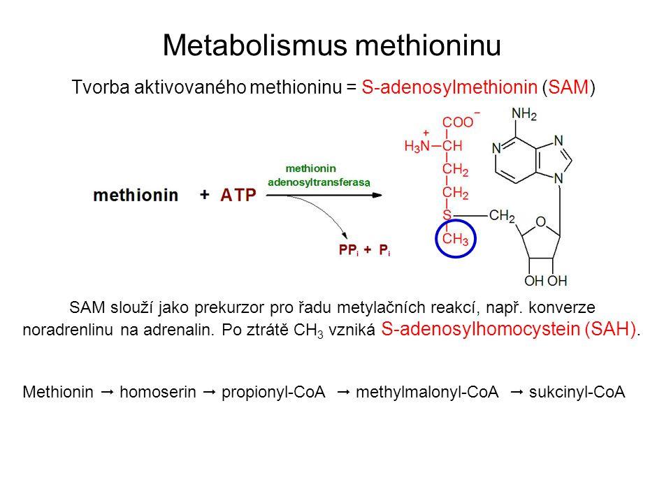 Tvorba aktivovaného methioninu = S-adenosylmethionin (SAM) Metabolismus methioninu SAM slouží jako prekurzor pro řadu metylačních reakcí, např. konver