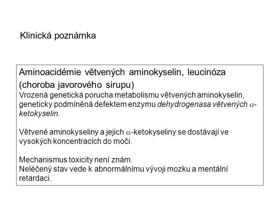 Aminoacidémie větvených aminokyselin, leucinóza (choroba javorového sirupu) Vrozená genetická porucha metabolismu větvených aminokyselin, geneticky po
