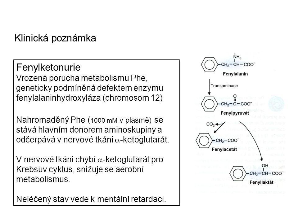 Fenylketonurie Vrozená porucha metabolismu Phe, geneticky podmíněná defektem enzymu fenylalaninhydroxyláza (chromosom 12) Nahromaděný Phe ( 1000 mM v